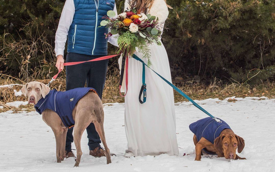 Dogs: The Only Welcomed Guests at this Elopement!